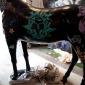 baz-the-horse-10