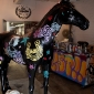 baz-the-horse-11