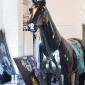 baz-the-horse-4
