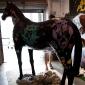 baz-the-horse-9